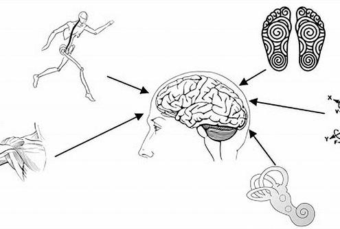 Movimento somatico ginnastica dolce biosomatica lodi